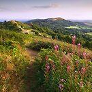 British Camp in late Summer . Malvern Hills by Angie Latham