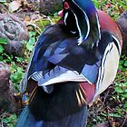 Wood Duck Backside by Cynthia48