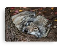 Nap Time Canvas Print