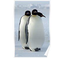 Emperor Penguins Huddled Poster
