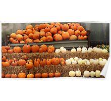 Pumpkins galore!!!! Poster