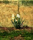 A Spot of Spring by RC deWinter