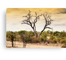 AWESOME SOUTH AFRICA - SAVANNAH TREE Canvas Print