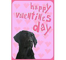 Black Labrador Happy Valentine's Day Photographic Print