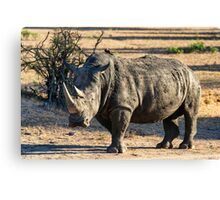 AWESOME SOUTH AFRICA - RHINO Canvas Print