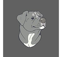 Pit bull Pride-Blue Photographic Print