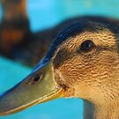 A Duck by Confundo