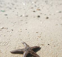 Starfish by the sea by Talida Pacurar