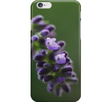 Lavender flower iPhone Case/Skin