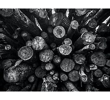 A Pile of Logs Photographic Print