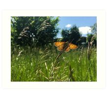 Tribu d'insectes profitant du soleil - Photo n°1 Art Print