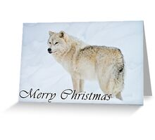 Arctic Wolf Christmas Card - English - 9 Greeting Card