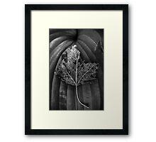 Leaf Variations Framed Print