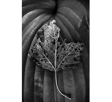 Leaf Variations Photographic Print