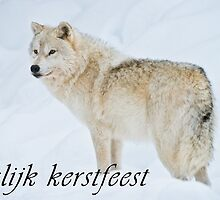 Arctic Wolf Christmas Card - Dutch - 9 by WolvesOnly
