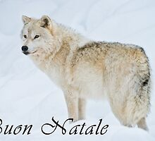 Arctic Wolf Christmas Card - Italian - 9 by WolvesOnly