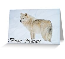 Arctic Wolf Christmas Card - Italian - 9 Greeting Card