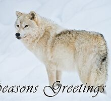 Arctic Wolf Seasons Card - 9 by WolvesOnly