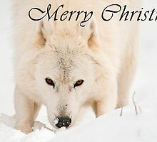 Arctic Wolf Christmas Card - English - 10 by WolvesOnly