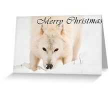 Arctic Wolf Christmas Card - English - 10 Greeting Card
