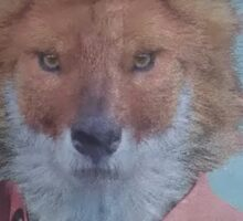 early fox Sticker