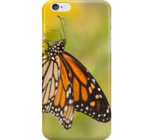 The Monarch Butterfly iPhone Case/Skin
