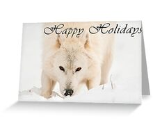 Arctic Wolf Holiday Card - 10 Greeting Card