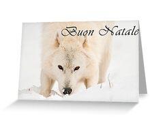 Arctic Wolf Christmas Card - Italian - 10 Greeting Card