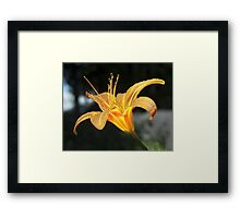 Molten Lilly Framed Print