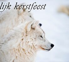 Arctic Wolf Christmas Card - Dutch - 11 by WolvesOnly