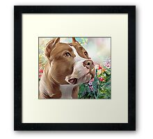 Pit Bull Painting  Framed Print