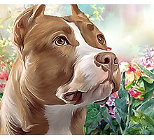 Pit Bull Painting  Photographic Print