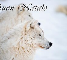 Arctic Wolf Christmas Card - Italian - 11 by WolvesOnly
