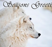 Arctic Wolf Seasons Card - 11 by WolvesOnly