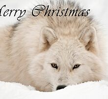 Arctic Wolf Christmas Card - English - 12 by WolvesOnly