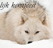 Arctic Wolf Christmas Card - Dutch - 12 by WolvesOnly