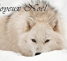 Arctic Wolf Christmas Card - French - 12 by WolvesOnly