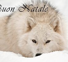 Arctic Wolf Christmas Card - Italian - 12 by WolvesOnly