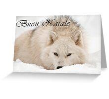 Arctic Wolf Christmas Card - Italian - 12 Greeting Card