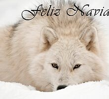 Arctic Wolf Christmas Card - Spanish - 12 by WolvesOnly