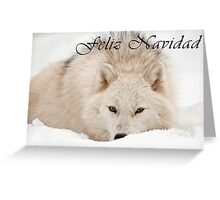 Arctic Wolf Christmas Card - Spanish - 12 Greeting Card