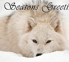 Arctic Wolf Seasons Card - 12 by WolvesOnly