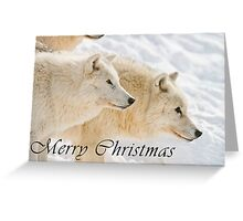 Arctic Wolf Christmas Card - English - 13 Greeting Card