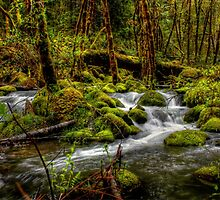 About The Green Stuff ~ Oregon Scenic Rivers ~ by Charles & Patricia   Harkins ~ Picture Oregon