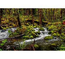 About The Green Stuff ~ Oregon Scenic Rivers ~ Photographic Print