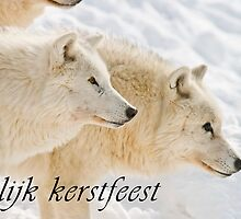 Arctic Wolf Christmas Card - Dutch - 13 by WolvesOnly
