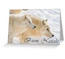 Arctic Wolf Christmas Card - Italian - 13 Greeting Card