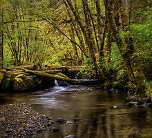 Keep Cool ~ Whittaker Creek by Charles & Patricia   Harkins ~ Picture Oregon