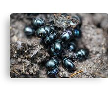 The dung beetles Anoplotrupes stercorosus Canvas Print