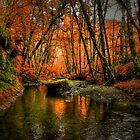 I'll Take It ~ Fall Colors On Whittaker Creek ~ by Charles & Patricia   Harkins ~ Picture Oregon